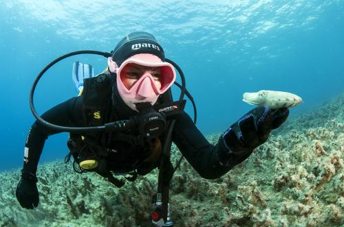 Cattlefish - Marco Daturi