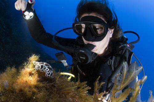 Dotted Sea Slug - Discodoris Atromaculata - Marco Daturi